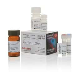 CyQUANT™ LDH Cytotoxicity Assay