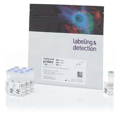 CellTrace™ Far Red Cell Proliferation Kit, for flow cytometry