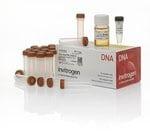One Shot&trade; BL21(DE3) Chemically Competent <i>E. coli</i>