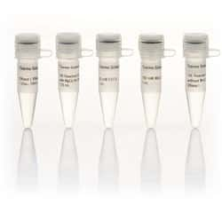 DNase I, RNase-free (supplied with MnCl2) (1 U/µL)