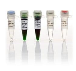 Phusion Green High-Fidelity DNA Polymerase (2 U/µL)