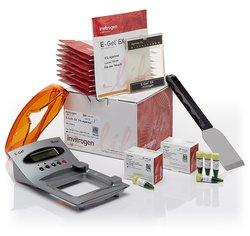 E-Gel® EX Agarose Gels Basic Starter Kit, 1%