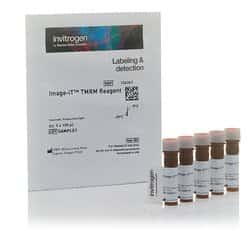 Image-iT™ TMRM Reagent (mitochondrial membrane potential indicator)