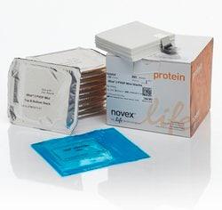 iBlot® 2 Transfer Stacks, PVDF, mini