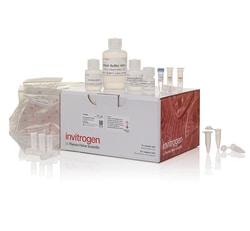 PureLink™ FFPE RNA Isolation Kit