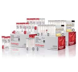 TA Cloning&trade; Kit, with pCR&trade;2.1 Vector and One Shot&trade; INV&alpha;F' Chemically Competent <i>E. coli</i>