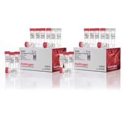 TA Cloning™ Kit, with pCR™2.1 Vector, without competent cells