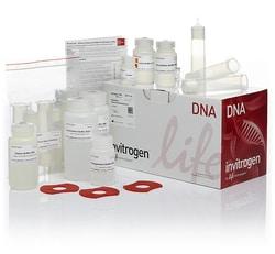 PureLink™ HiPure Plasmid Maxiprep Kit