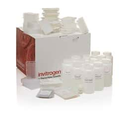 PureLink&trade; <i>Pro</i> Quick96 Plasmid Purification Kit