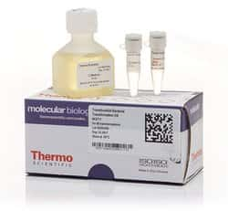 TransformAid Bacterial Transformation Kit