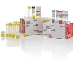 Zero Blunt&trade; TOPO&trade; PCR Cloning Kit, with One Shot&trade; MAX Efficiency DH5&alpha;-T1<sup>R</sup> <i>E. coli</i>