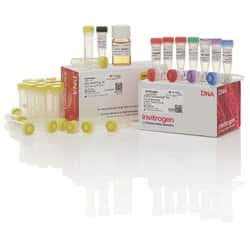 TOPO™ TA Cloning™ Kit for Sequencing, with One Shot™ TOP10 Electrocomp™ <i>E. coli</i>