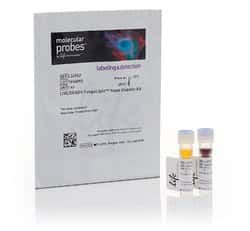 LIVE/DEAD™ <i>Funga</i>Light™ Yeast Viability Kit, for flow cytometry