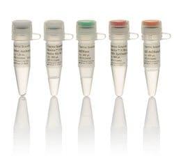 Maxima™ H Minus cDNA Synthesis Master Mix, with dsDNase