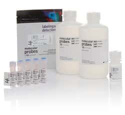 pHrodo&reg; Green <i>E. coli</i> BioParticles&reg; Phagocytosis Kit for Flow Cytometry