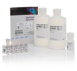 pHrodo™ Green <i>S. aureus</i> BioParticles™ Phagocytosis Kit for Flow Cytometry