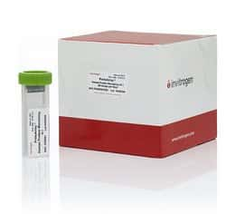 ProtoArray™ Human Protein Microarray, Discovery Study Bundle