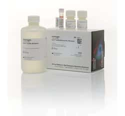 Qubit™ dsDNA BR Assay Kit