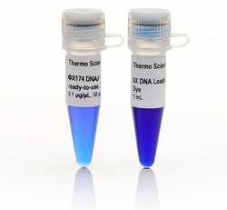 phiX174 DNA/BsuRI (HaeIII) Marker, ready-to-use