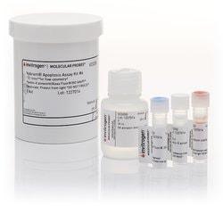 Vybrant™ Apoptosis Assay Kit #6, Biotin-X Annexin V/Alexa Fluor™ 350 Streptavidin/Propidium Iodide