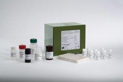 MBL Oligomer Human ELISA Kit