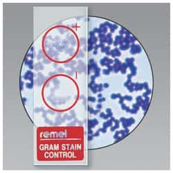 Remel™ QC-Slide™ Gram Stain Control