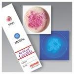 Remel™ BactiCard™ Candida Kit