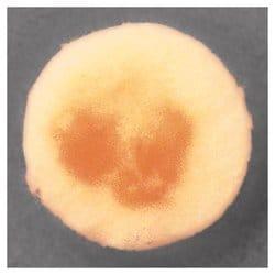 Remel™ Caffeic Acid Disc