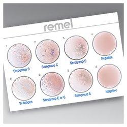 Wellcolex™ Color Salmonella Rapid Latex Agglutination Test Kit