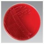Remel™ Anaerobic Blood Agar, Monoplate