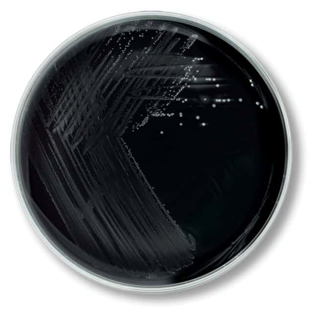 Remel Charcoal Blood Agar W Cephalexin Regan Lowe Medium