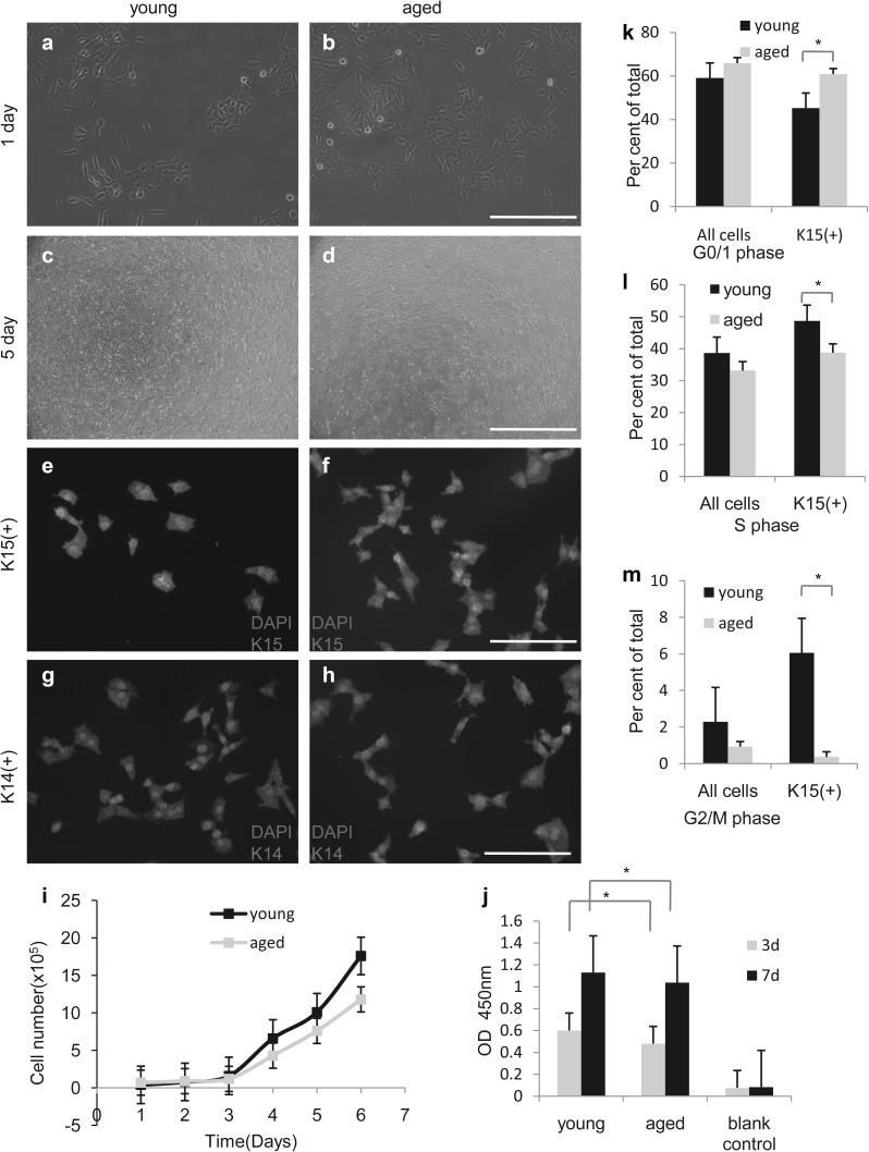 Cytokeratin 15 Antibody