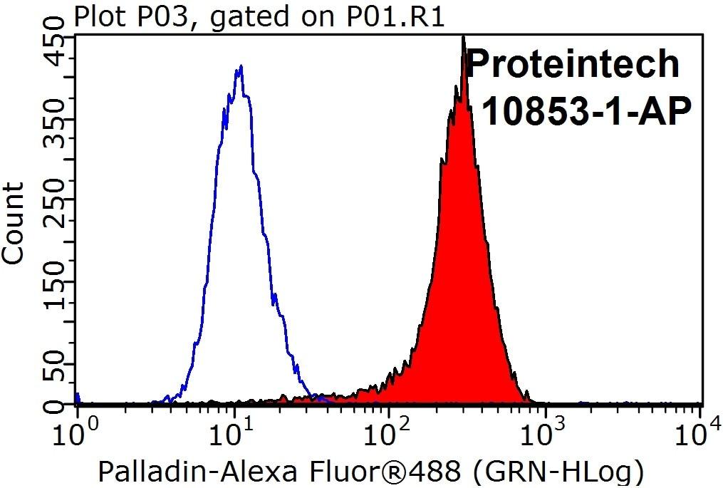 Palladin Antibody in Flow Cytometry (Flow)