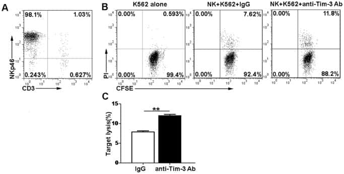 CD3e Antibody