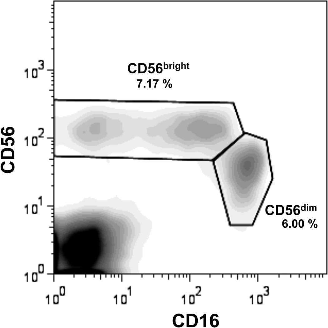 CD16 Antibody