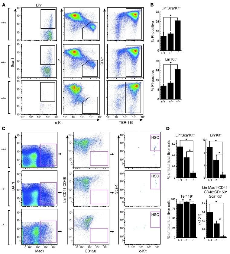 Ly-6A/E (Sca-1) Antibody