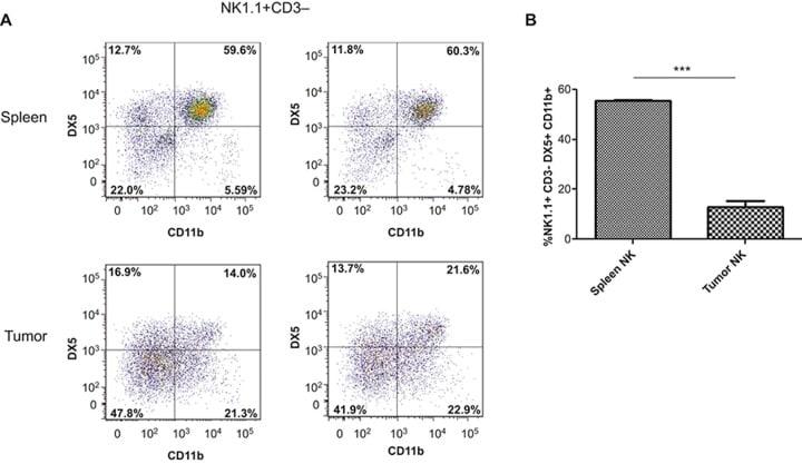 CD49b (Integrin alpha 2) Antibody