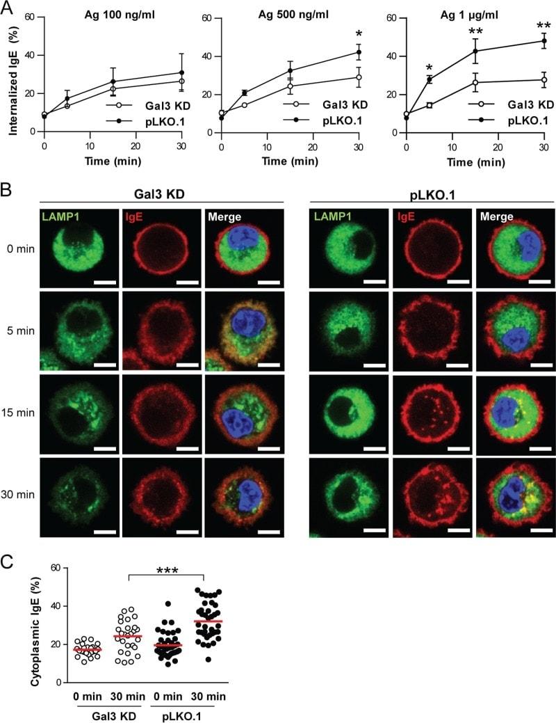 FceR1 alpha Antibody
