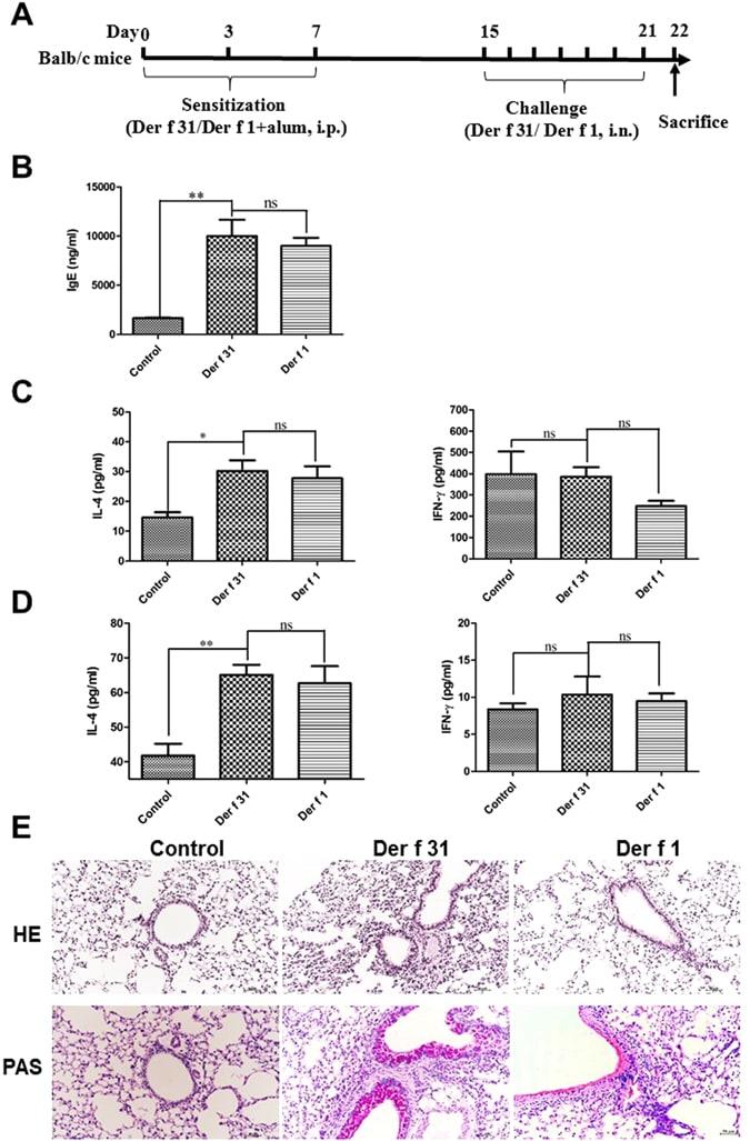 IL-4 Antibody