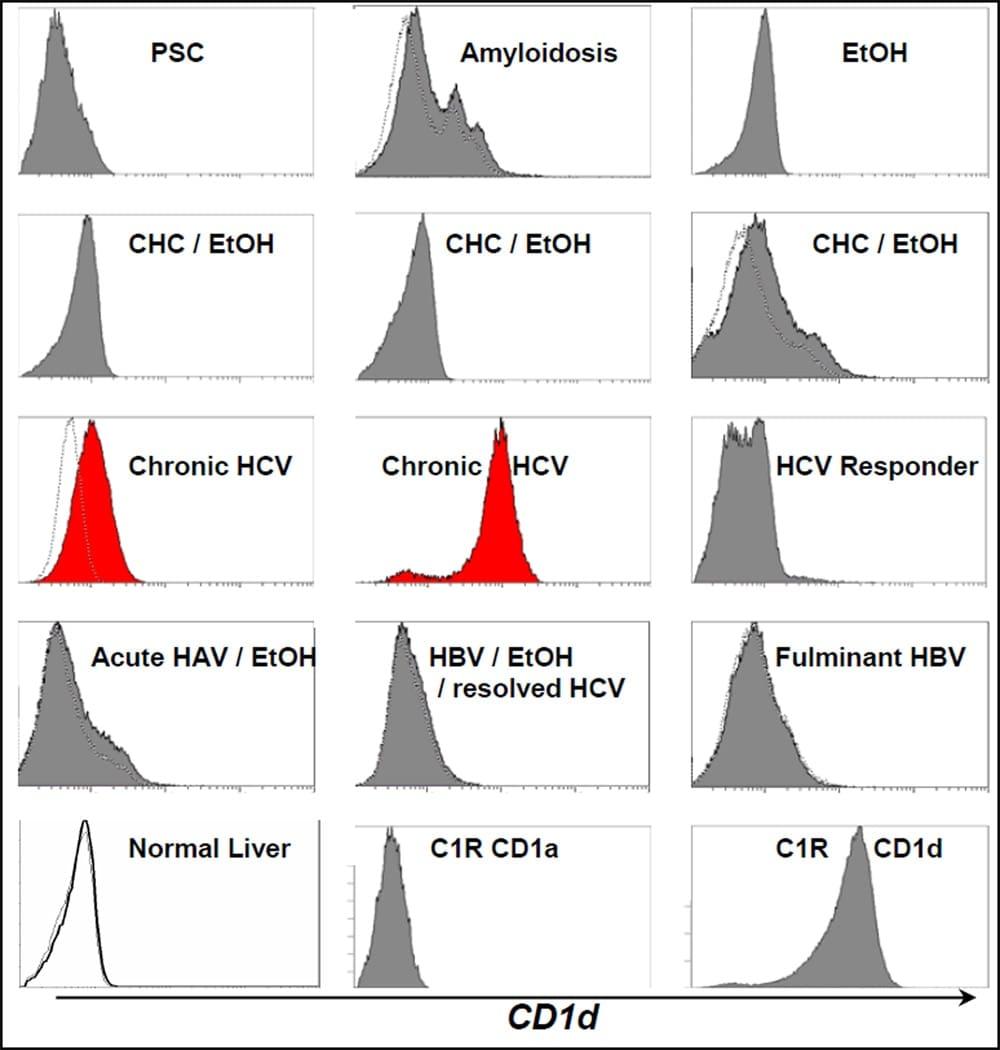 CD1d Antibody
