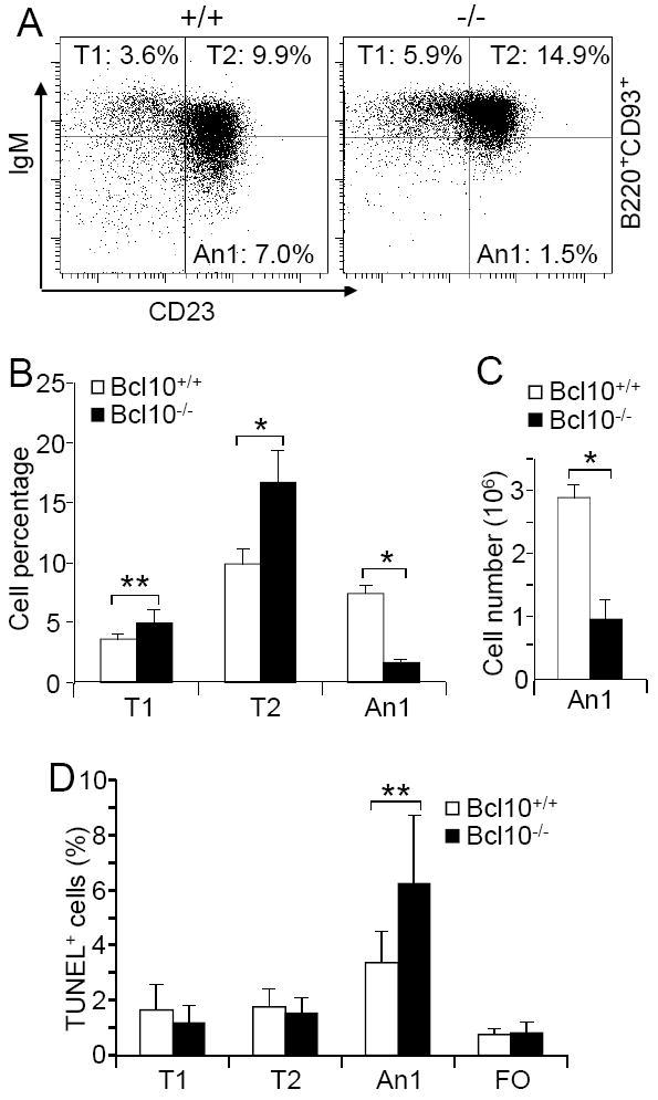 CD93 (AA4.1) Antibody