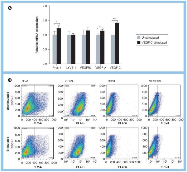 CD29 (Integrin beta 1) Antibody