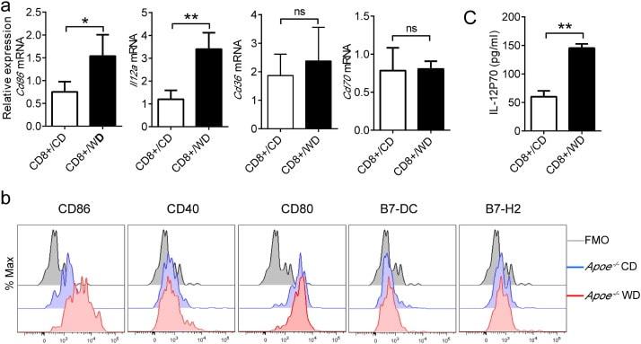 CD40 Antibody
