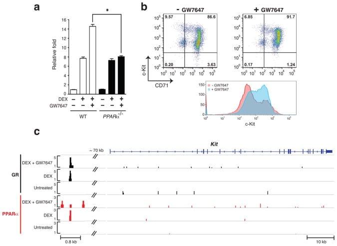 CD71 (Transferrin Receptor) Antibody