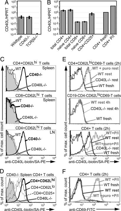 CD154 (CD40 Ligand) Antibody