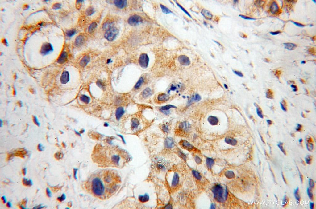 EDIL3 Antibody in Immunohistochemistry (Paraffin) (IHC (P))