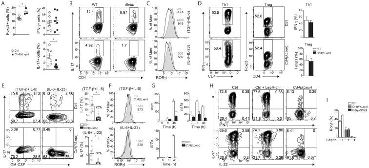 ROR gamma (t) Antibody