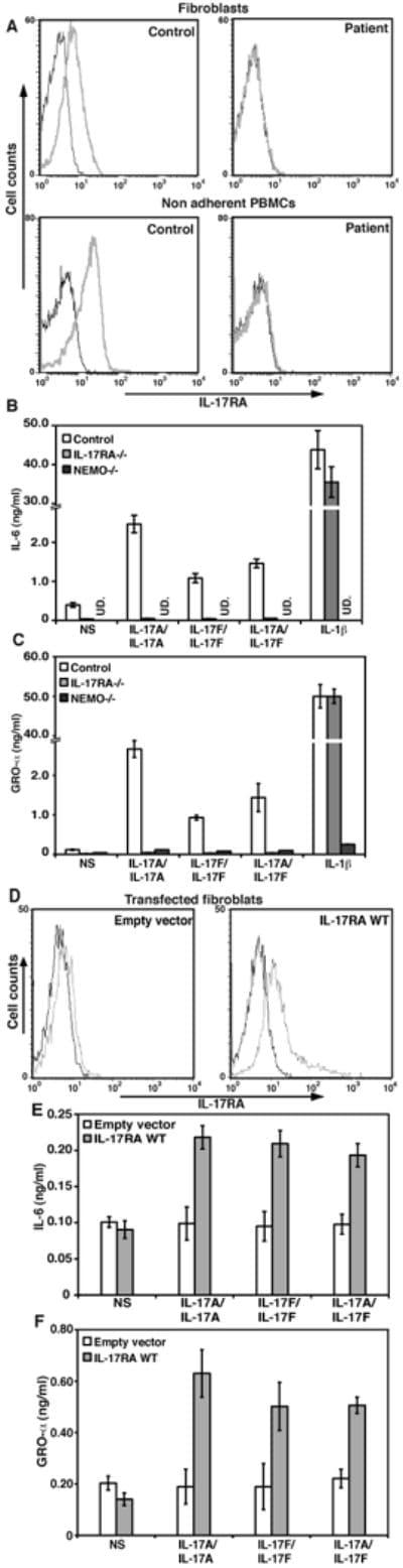 CD217 (IL-17Ra) Antibody