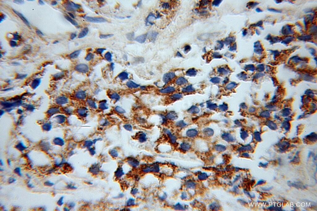 OPRL1 Antibody in Immunohistochemistry (Paraffin) (IHC (P))
