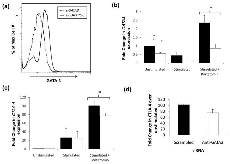 Gata-3 Antibody